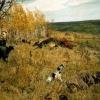 А. А. Пластов: картини майстра реалізму