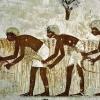 Що таке землеробство? Історія виникнення землеробства