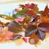 Квіти з листя дерев своїми руками: майстер-клас з фото покроково
