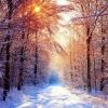 Грудень - місяць з найкоротшим днем, а також саме насичене святами пору року