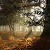 День працівників лісу - чудовий день сентября!