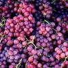 Дробарки для винограду: різновиди і технічні характеристики