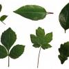 Форма листя рослин
