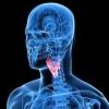 Гормон щитовидної залози в таблетках: інструкція та відгуки