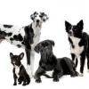 Хондропротектор для собак: класифікація, застосування, відгуки