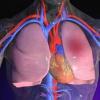 Масаж серця і штучне дихання: техніка проведення, правила і послідовність
