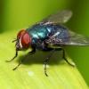"""Історія фразеологізму """"мухи не образити"""": походження, значення і тлумачення"""