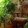 З чого можна зробити добриво для кімнатних рослин в домашніх умовах?