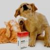 """""""Екзекан"""" для собак: інструкція, опис, ціна"""