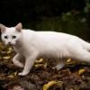До чого сниться біла кішка? Тлумачення снів
