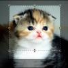 """Як змінити розмір зображення в """"Фотошопі"""", зберігши пропорції?"""