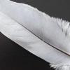Як намалювати перо птаха швидко і красиво?
