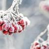Як утворюється іній? Барвисті візерунки зими