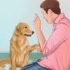 Як зробити собаку злий на чужих людей. Поради та рекомендації