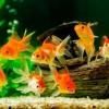Як вибирати обладнання для акваріума?