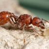 Які комахи їдять комах? Які тварини їдять комах?