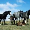 Яке значення ссавців у природі та житті людини?