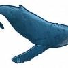 Кіт - це риба або ссавець? Цікаві факти про китах
