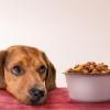 Краща їжа для чотириногого друга - корм для собак Pro Plan