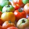 Чи можна їсти помідори при грудному вигодовуванні?