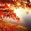 Опис осіннього лісу в яскравих фарбах. Час для тиші і натхнення