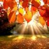 Осінь - час чудес. Чим можна зайнятися в осінні місяці?