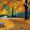 Осіння фотосесія в парку: ідеї, пози