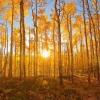 Осика восени - неймовірна краса і буйство фарб