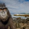 Відмінності і подібності тварини і людини: внутрішні органи, зовнішній вигляд, спілкування, відносини
