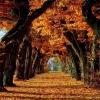 Природа восени: череда дивовижних метаморфоз