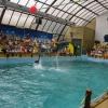 Ростовський дельфінарій чекає гостей!