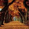 Найцікавіші факти про осінь