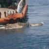 Шокуючі новини: труп динозавра сплив у Перській затоці