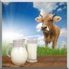 Стерилізатор молока для будинку і для ферми