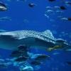 Таємнича і незвідана життя в океані