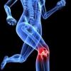 Вітаміни для суглобів і зв'язок спортсменів: рейтинг, склад, відгуки