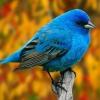 Зовнішня і внутрішня будова птахів. Внутрішні органи птахів