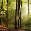 Загадки про дерева для дітей та їх батьків